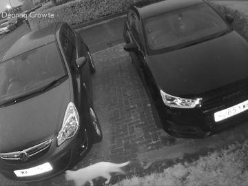 Una cámara de seguridad capta a un 'gato fantasma' y se vuelve viral