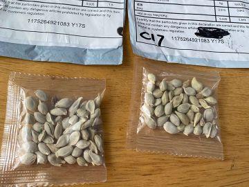 Las misteriosas semillas enviadas desde China a EEUU sin que los destinatarios las pidan