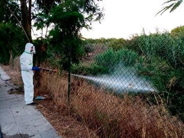 Un operario fumiga un terreno en Palomares del Río