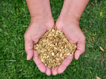 Qué es el 'brushing': el método de envío de paquetes de semillas no solicitados
