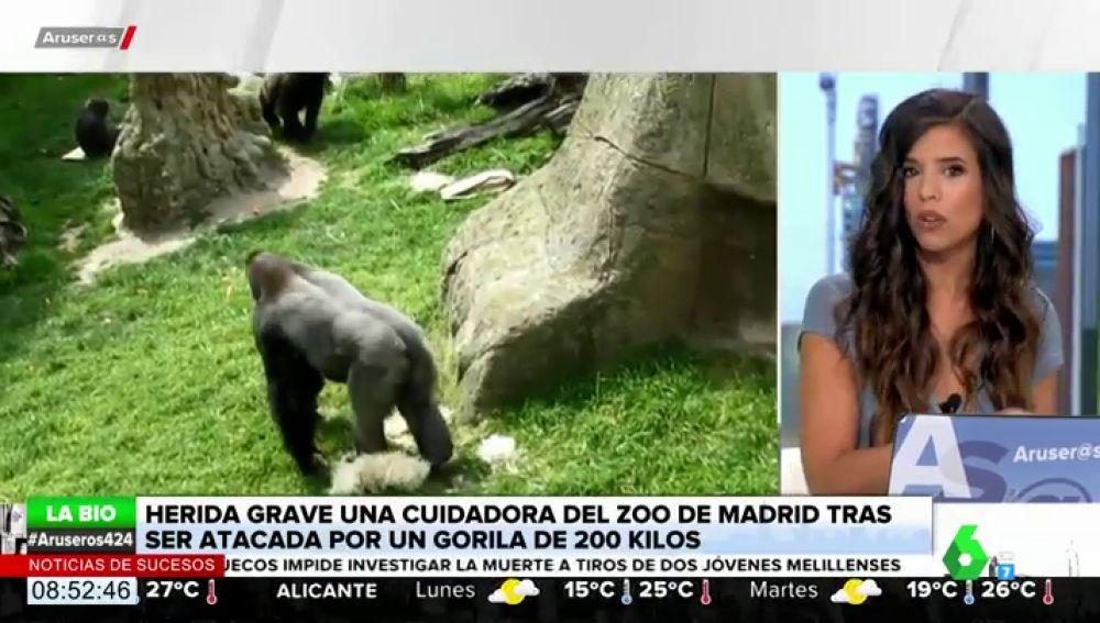 Evelyn Segura habla del ataque de un gorila del Zoo de Madrid a su cuidadora