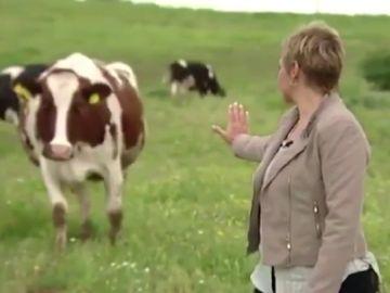 La demostración de Gloria Serra a la ciencia: así consiguió 'comunicarse' con una vaca con la mirada