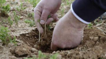El secreto del cultivo sostenible que nos hace reflexionar sobre nuestros hábitos de consumo