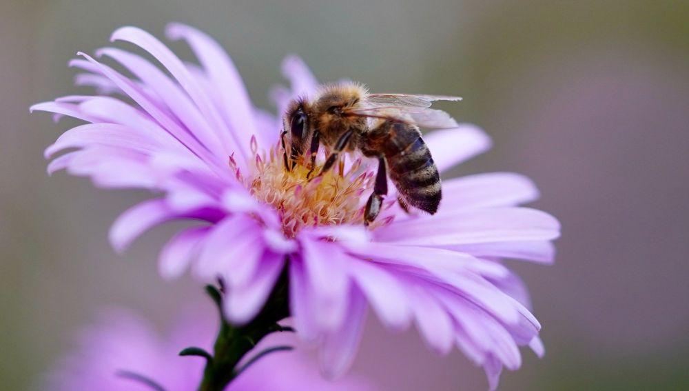 Una abeja polinizando una flor