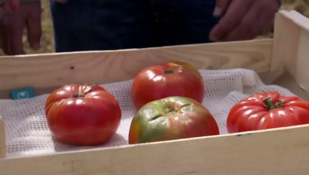 Aprende a distinguir un auténtico tomate rosa de Barbastro del resto que dice serlo
