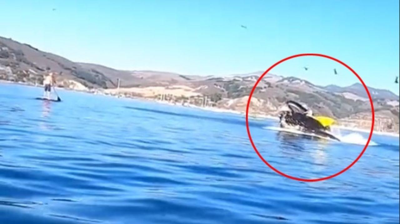 Una ballena engulle a dos kayakistas
