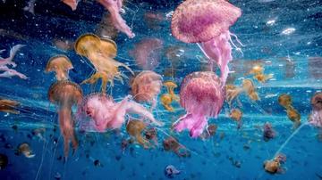 """Gracias a las medusas podemos ir a las playas: el """"animal más odiado"""" del mar no es tan malo como crees"""
