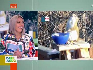 """El divertido dardo de Cristina Pedroche a Lorena Castell tras ver el vídeo viral de la """"ardilla borracha"""""""