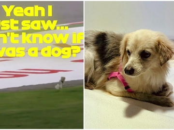 Una perra en el GP de Baréin
