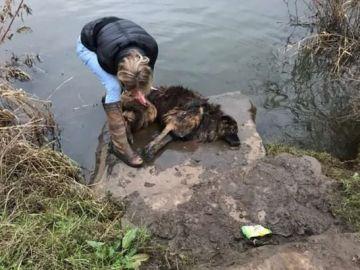 Fotografía del rescate de Bella