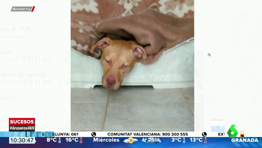 La perra ha sido rescatada y se encuentra sana y salva