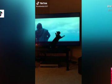 El divertido vídeo en el que un gato se cree que Kylo Ren está lanzándole una pelota