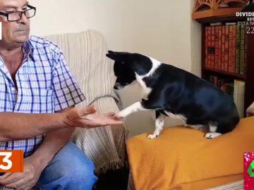 ¿Saben los perros sumar y multiplicar? El vídeo viral que deja loco a los zapeadores