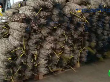 Sacos de pistachos fraudulentos