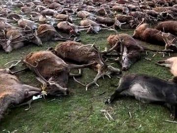 Indignación en Portugal por la masacre de 540 venados y jabalíes