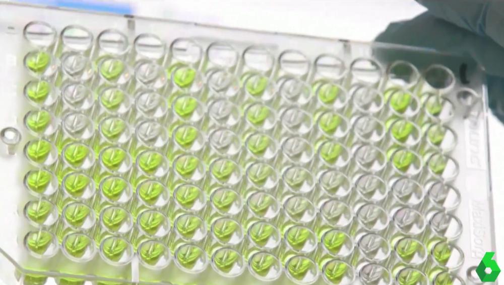 El reto definitivo de las vacunas: ¿habrá suficientes para todos?