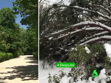 Imagen del Parque del Retiro antes y después de la llegada de Filomena