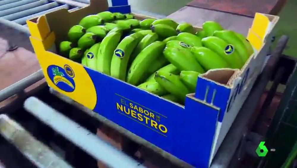 El plátano de Canarias pide ser una excepción en la nueva ley de la cadena alimentaria