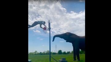 Rene Casselly, atleta alemán que hace acrobacias con elefantes