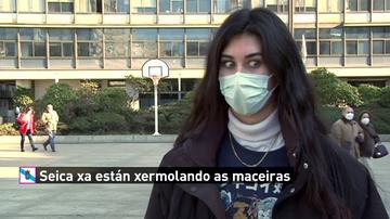 ¿Saben hablar bien gallego los jóvenes de ciudad de Galicia?