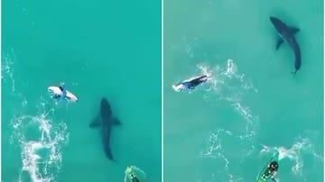 Un tiburón, nadando entre personas en Australia