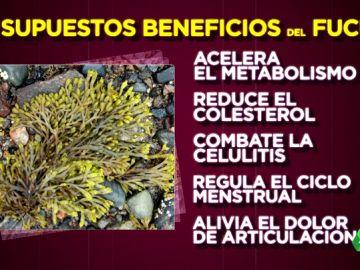 ¿Ayuda a adelgazar y reducir la celulitis la famosa alga fucus? Boticaria García resuelve las dudas sobre sus beneficios reales