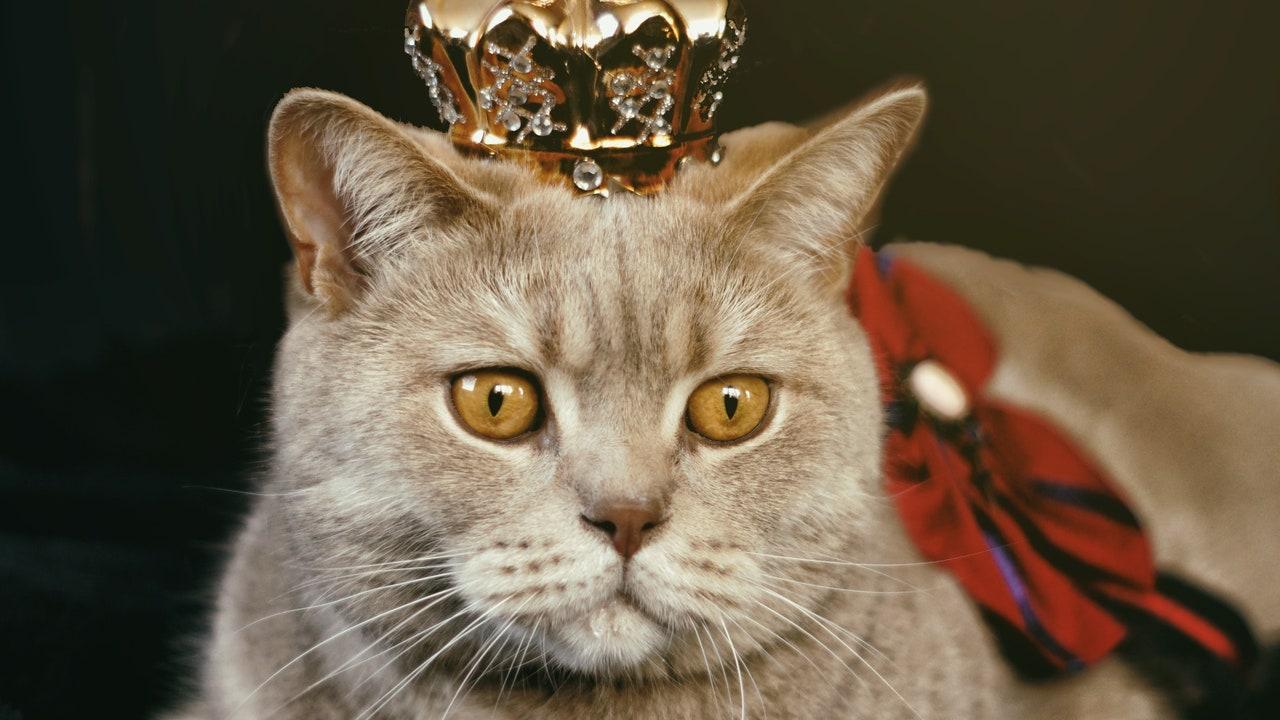 Un gato con una corona