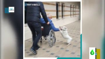 El emotivo reencuentro entre un perro y su dueño tras pasar una semana ingresado en el hospital