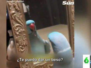 El vídeo viral de la cacatúa más presumida de la historia: así se da un beso mientras se mira en el espejo