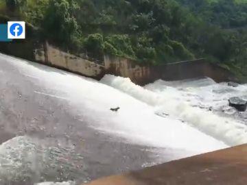 El impactante vídeo en el que un perro se lo lleva la corriente tras caer a una presa: así ha sido el peligroso rescate