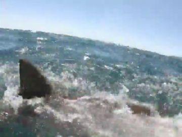 Pone los pelos de punta: un tiburón le quita a un pescador el pez de las manos