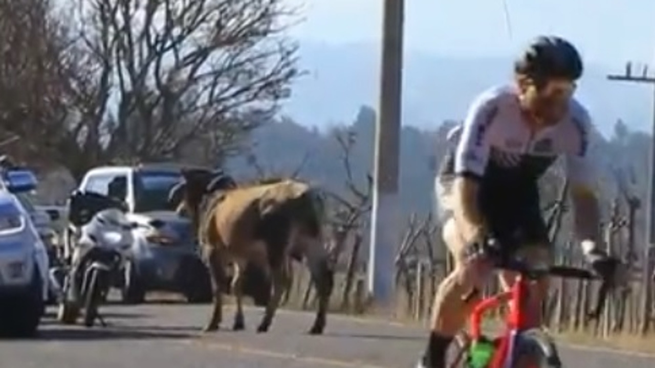 Un animal interrumpe una etapa ciclista