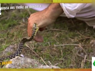 Una serpiente muerde a Frank Cuesta