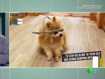 La ingeniosa solución casera para evitar que una perra ciega se choque con las paredes
