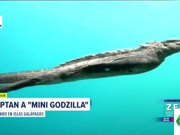 Localizan a un mini Godzilla nadando en las Galápagos