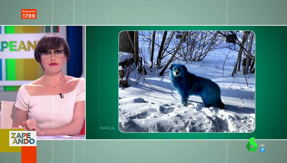 El misterioso hallazgo de los perros rusos que se han vuelto azules