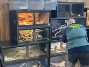La Guardia Civil investiga a un hombre con más de 40 serpientes