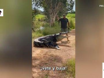Con un palo minúsculo y a gritos: la divertida reacción de un reportero australiano al cruzarse con un cocodrilo
