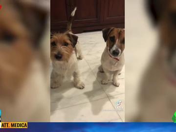 El vídeo viral de un perro cantando el 'Feliz Cumpleaños' junto a su dueña