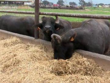 """Investigan los posibles riesgos para la salud de una mozzarella """"100% de leche de búfala"""" vendida en Cataluña"""