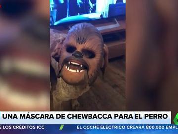 Esto es lo que ocurre cuando disfrazas a tu perro con una máscara de Chewbacca