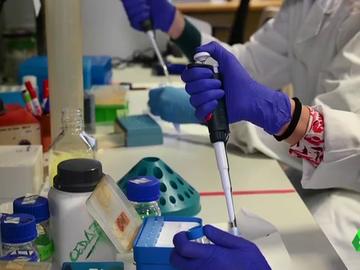 """Los biólogos piden ser reconocidos como sanitarios: """"Nos ubica en situación de ilegalidad"""""""