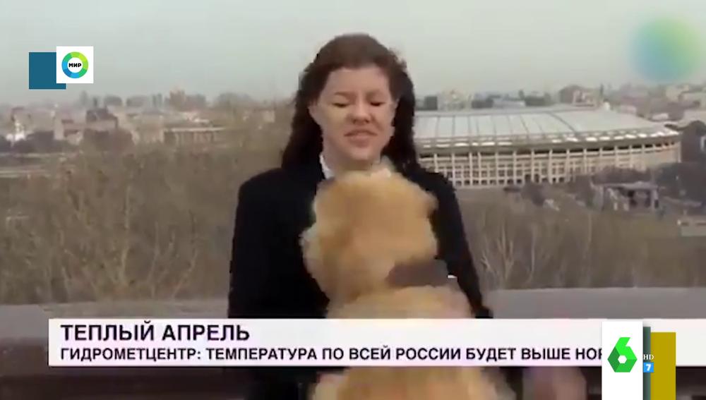 Un perro se cuela en un directo para robar el micrófono a la reportera