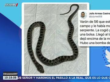 Le muerde una serpiente y la lleva al hospital para saber si es venenosa
