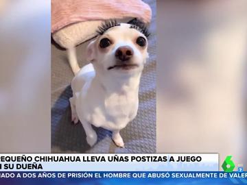La sorprendente imagen de un perro tras colocarle uñas y pestañas postizas