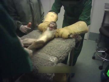 Protesta frente al laboratorio de Vivotecnia: exigen su cierre por maltrato experimentando con animales
