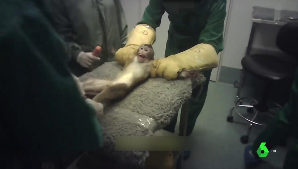 Madrid suspende la actividad del laboratorio Vivotecnia tras filtrarse duras imágenes de maltrato animal