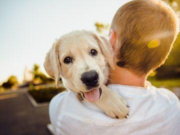 Imagen de archivo de un perro como animal de compañía