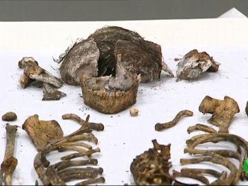 Encuentran un sarcófago con el cuerpo de una niña en la Capilla del Real Alcázar de Sevilla