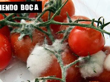 Imagen de tomates con moho